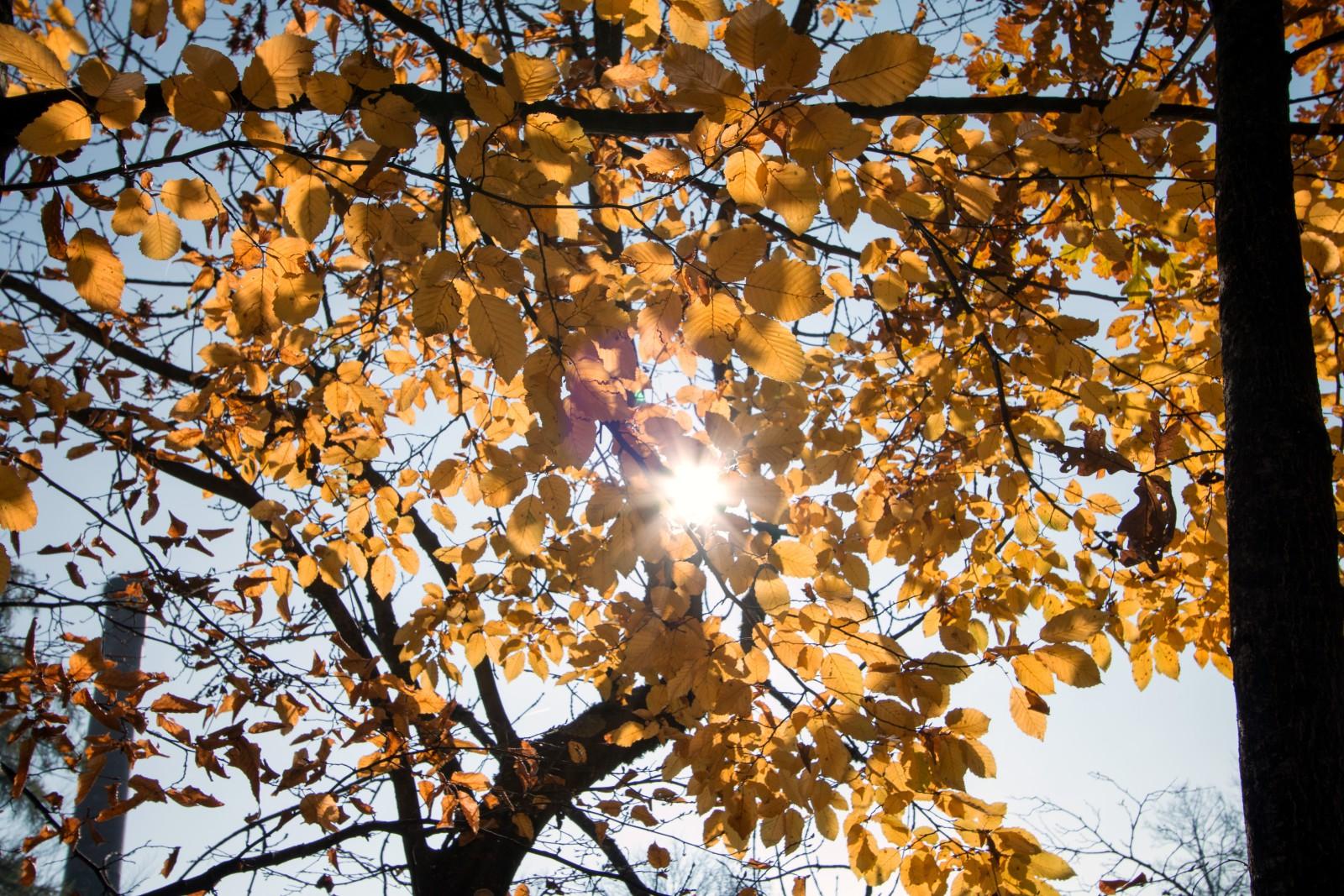 Herbst am Schönauweiher